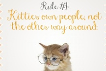 Rules of a Kitty / by Meow Mix
