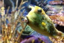 Fan Photos  / by National Aquarium