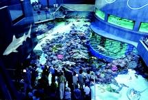 Blacktip Reef / by National Aquarium
