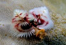 Fishin' You a Happy Holidays! / by National Aquarium