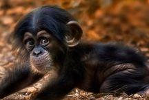 Animal kingdom / by Diane Hilton
