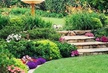 Hillside Gardens / by Bonnie Amos