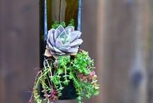 Wine times / by Upcycle That