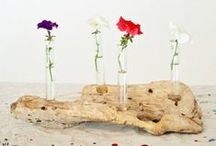 Plant life / by Upcycle That