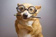 F U R B A B I E S / All things animal - Dogs - Cats - Nature / by Crystal Stewart