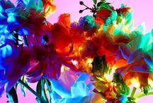 Prints - Floral / by aaryn west
