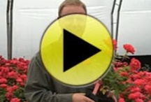 Garden Videos / by Great Garden Plants