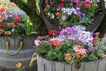 You Garden / You #Beautifull #Garden / by Federic Nun