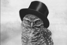Owls. / by Elisabeth Bridges