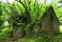 Moss-Covered Ruins / I love 'em. / by Elisabeth Bridges