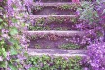Purple Haze / by Marla Affleck Radeke