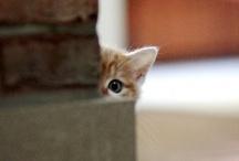 Cute animals / by po zya