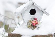 Grow: The Garden in Winter / by Linda James