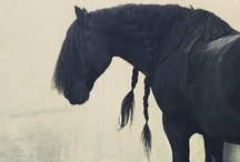 The Horse / The horse. A magnificent creature. / by Lesley Sanders