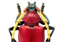 Bugs / by John Christie