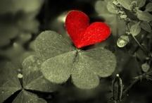 Hearts Always  / by Maureen Welch