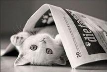 Cute Cats / by Xueling Zou