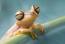Reptiles & Amphibians / by Xueling Zou