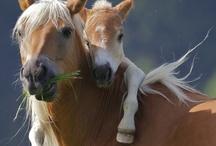 Equus Caballus / by Rhonda