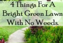 Green - Yards & Other Outdoor Spaces / by Vicky L.