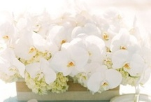 Reception Flowers / by Green Wedding Ideas by Green Bride Guide / Kate