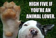 Animal Lover :-) / by Ashley Bittenbender
