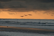 Oceans / by T.J. Phillips
