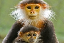 Animals ~ Primates / by Peg Pittaway