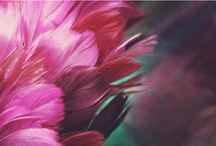 Paleta de Color / by Berni Bunster