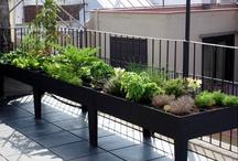 Exteriors & Gardening / Outdoor architecture/decor & gardening inspiration / by Jordan Ashleigh