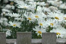Gardening / by Shauna Dunlap