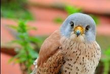 Birds / by Rita Fidis