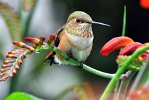 Hummingbirds buzz on by! / Especially beautiful little creatures from The Father above! / by Jane McWilliams Moseley
