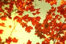 fall / by Faith Stewart