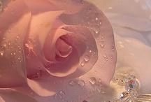 **beautiful** / by K@ti@ V@leri@
