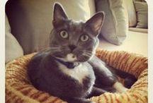 MY CATS! :D  / by April Athena7