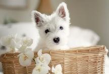 I want a dog! / by Amanda Sabo