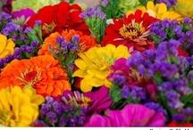Pretties / Colors / by Lisa Deere