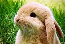 Easter / by Debbie Hodge