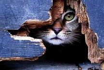 Cute Cats / by PAWS of Coronado