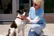 Pet Adoption Information / by PAWS of Coronado