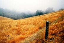 California 37 Lyrics / by Train Music