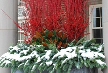 Christmas Decor / all things Xmas  / by Anita (Stewart) Williams