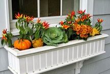 Accessorize Your Windows / Ideas for adding even more beauty to your home's windows. / by PGT Industries