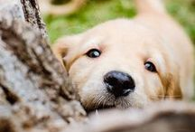 Puppies! / by Casey Young