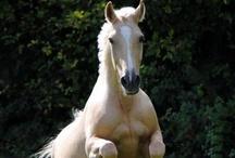 Horses / by Darcie Schneidewind