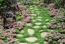 Gardening / by Marci Monroe