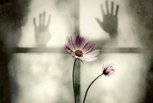 Let me in... / by DeeDee LeBaron