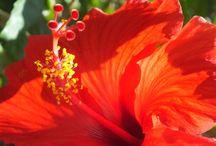 Flowers / by Kathleen Killingsworth