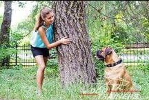 #Bullmastiff / by ForDogTrainers.com